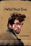 یادداشتی بر فیلم درخت گلابی وحشی, The Wilde Pear Tree, ریشه های زندگی