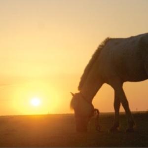 نمایی از فیلم مردی که اسب شد