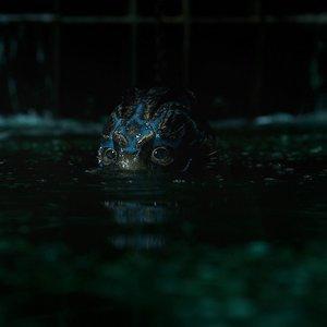 """داگ جونز درنمایی از فیلم """"شکل آب"""""""
