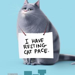 پوستر انیمیشن «زندگی مخفیانه حیوانات خانگی»