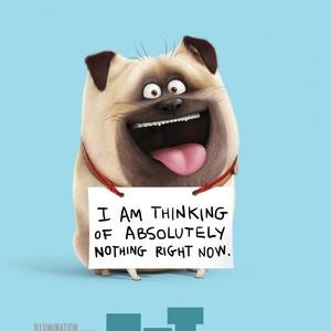 پوستر «زندگی مخفیانه حیوانات خانگی»(The Secret Life of Pets)