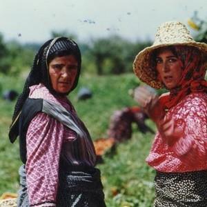فاطمه معتمدآریا و گلاب آدینه در فیلم «روسری آبی»