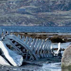 فیلم «لویاتان»(Leviathan)