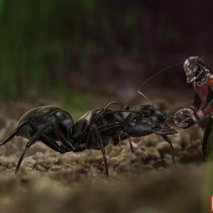 مرد مورچه ای